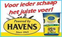 www.schapenvoeders.nl